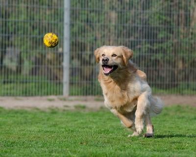 Ballkanone für Hunde